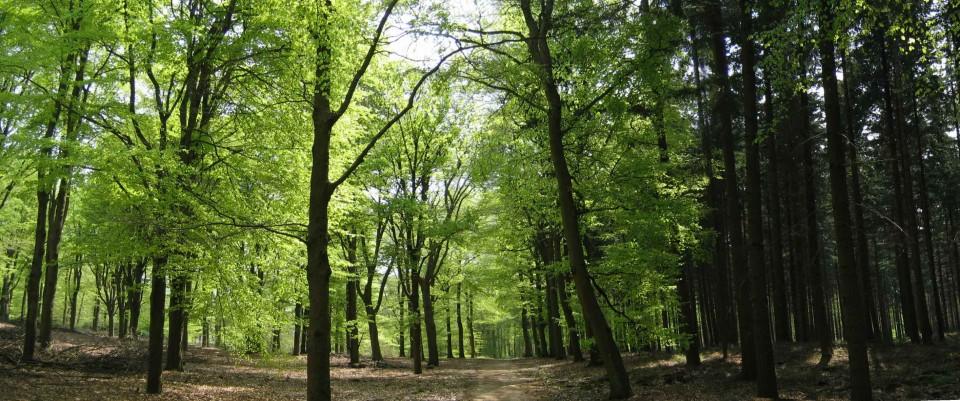 bossen tegen klimaatverandering